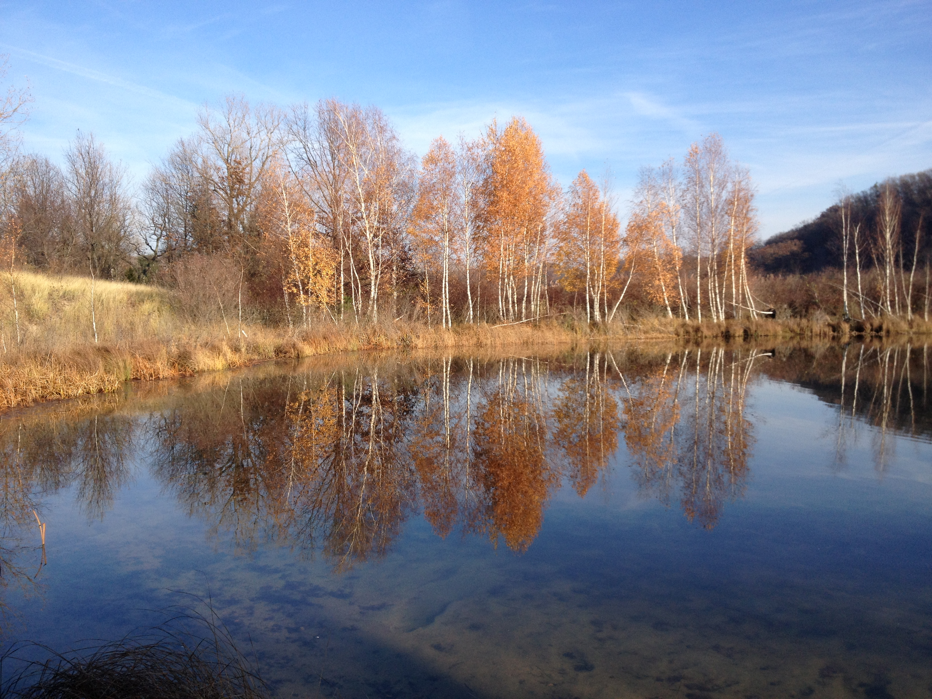 View across a section of water with the changing leaves of trees being mirrored in the water underneath a blue slightly cloudy sky.