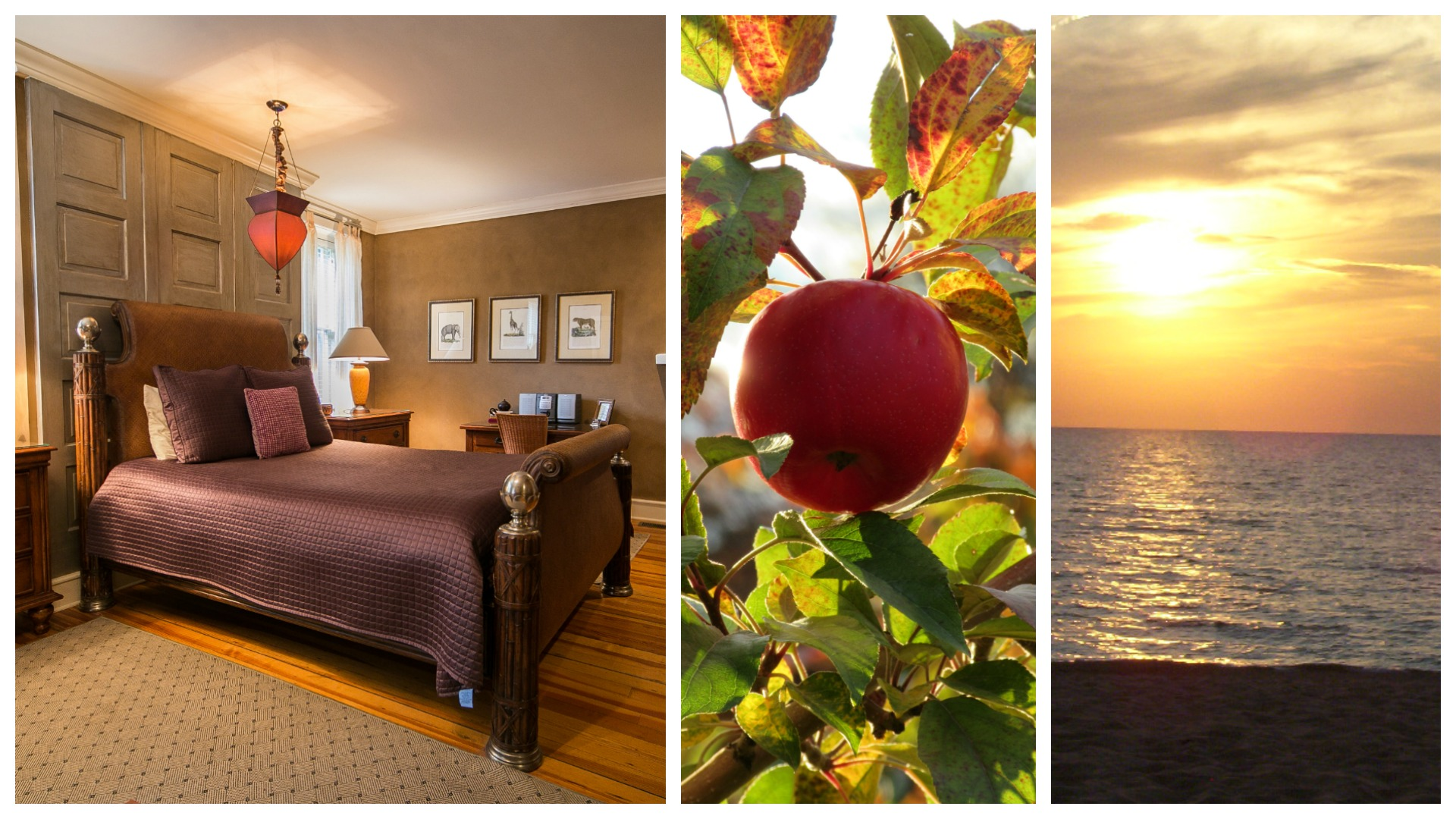 Collage of a bedroom wiht high back bed and purple spread, a plum on the tree, and the sun setting over the water.